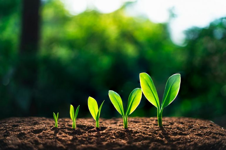 Orgullosos de crecer en cifras y valores, un resumen de 2019